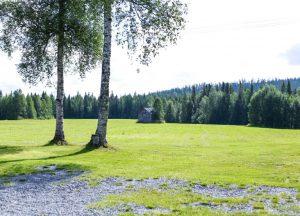 Heinälato pellolla